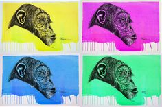 Pop Chimpanzee. charcoal and acrylic on waterpaper. Artwork By hector Prado