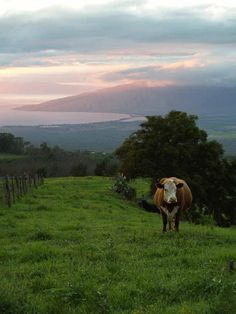 maui photos | Upcountry Maui Pinterest