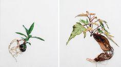 Embroidered Landscapes And Plants – Fubiz™