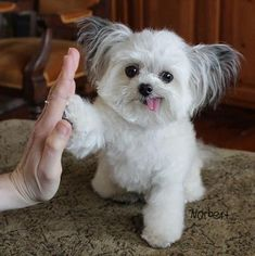 dog training,dog hacks,smart dog,teach your dog,dog learning Cute Puppies, Cute Dogs, Dogs And Puppies, Awesome Dogs, Cute Baby Animals, Funny Animals, Bff, Pet News, Therapy Dogs