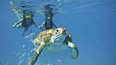 Snorkel at Dafni Beach #Zante