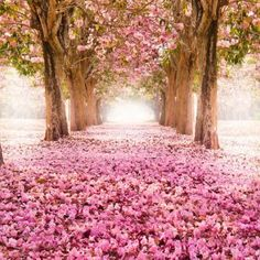 Yonder magical forest of pink blossom flowers Wallpaper Mural for a childs bedroom