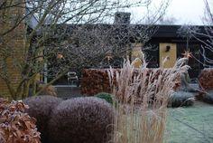 almbacken-string-ights-winter-garden-gardenista