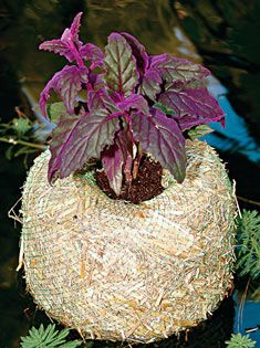 """Barley planter to float in pond keeps up to 1,000 gallons clear. You get clear water and protect certain plants from fish nibbles. Doctor's Foster and Smith website. Small, 7-1/2"""" dia x 6"""" high = $12.99 Large, 10-1/2"""" x 6-1/2"""" high = $22.99"""