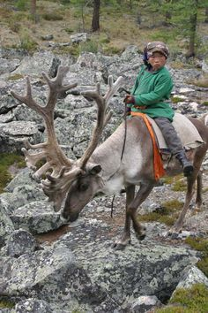 Tsaatan Nomad, Northern Mongolia. The Tsaatan rely on the reindeer for most, if not all, of their basic needs: milk, which is also used to make cheese; antlers, which they use to make tools; and first and foremost, transport. They do not use the reindeer for meat. This makes the indigenous group  unique among reindeer-herding communities. (V)