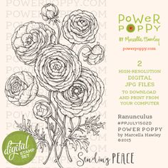 Ranunculus Digital Stamp Set | Power Poppy by Marcella Hawley