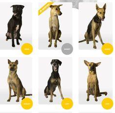 Home for Hope, IKEA cambia la comunicazione dei canili -