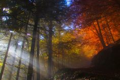Photo colors of the fall by Domen  Dolenc on 500px