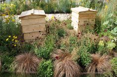 We'd love to keep bees & harvest our own honey for our soaps... Bees are great for your garden-