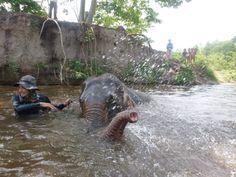 FIVE FUNNY ELEPHANTFACTS | www.frontiergap.com | #animals #lol #travel #volunteer