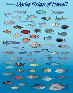 Hawaii Reef Fish guide with Hawaiian names #2 | Aloha Joe ...