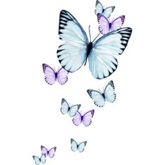 PurpleDay_Molemina95.png ❤ liked on Polyvore featuring butterflies, fillers, animals, backgrounds, blue, effects, embellish and detail