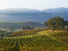 Visiting Paso Robles: Wineries | The Terroiriste