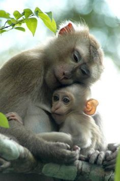 Monkeys Parenting