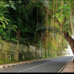 Our walk from the hotel to downtown - Ubud, Bali Holiday Places, Holiday Destinations, Java, Borobudur, Paradise Island, Lombok, Bali Travel, Ubud, Southeast Asia