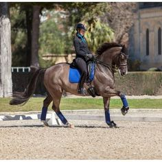 Rider using the LeMieux Pro Sport Luxury Suede Dressage Square Saddle Cloth Pad - Benetton Blue