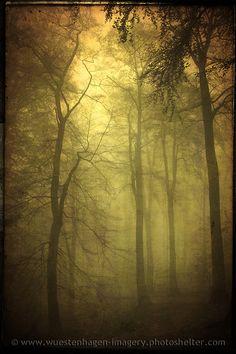 veiled trees by   Dirk Wüstenhagen