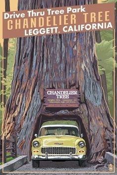 GOIN' ON THE LIST:    Chandelier Tree - Drive Thru Tree Park, Leggett, California