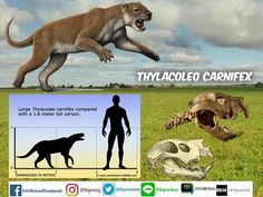 200 Thylacoleo Ideas In 2020 Marsupial Megafauna Extinct Animals
