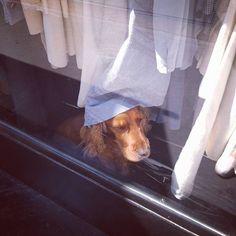 Si torna in città e si torna tra le vie di Torino alla ricerca di qualche chicca glamour...che dite l'abbiamo trovata? #torino #streetview #torinoèlamiacittà #shopping #tourinturin #dog #bau #quattrozampe #cucciolo #newcollection #torinopics #picoftheday