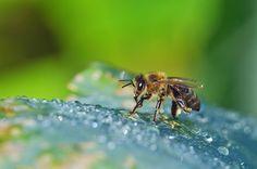 природа, макро, насекомые