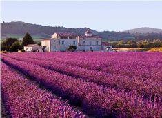 http://rcjohnsonwriter.com/wp-content/uploads/2011/04/800px-Lavender_field-sm.jpg