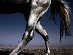 Habitually Chic®: HORSE