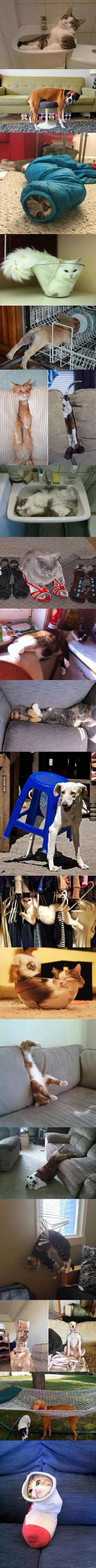 Pets Stuck in Odd Places But Don't Seem to Mind