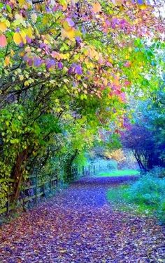 ღღღ  Colourful Pathway