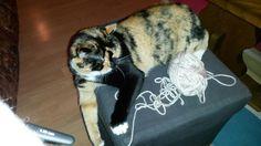 ....meine Hilfskraft  Cats, Animals, Hobbies, First Aid Only, Gatos, Animales, Animaux, Kitty, Cat