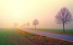 Road in the Middle of Foggy Field Background Wallpaper  #computerbackgroundimages #desktopwallpapers #desktopbackgrounds #hdwallpapers