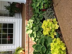 Shade plants, hostas, heucheras & Japanese painted fern