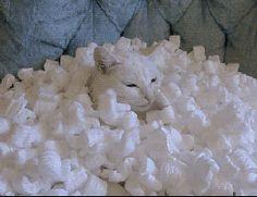 Cat in Peanut Pile