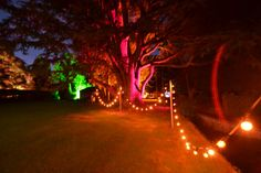 Does lighting get much better? Coloured halides to match your theme along with lines of festoon lights!  www.abbasmarquees.co.uk