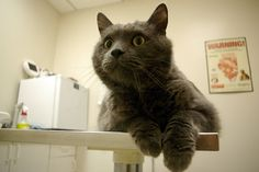 Dealing With Pet Health Emergencies