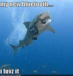 funny shark week bluetooth