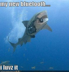 funny shark week bluetooth