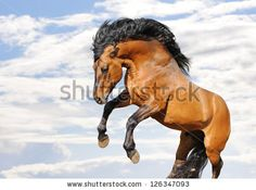 Find rearing horse stock images in HD and millions of other royalty-free stock photos, illustrations and vectors in the Shutterstock collection. Thousands of new, high-quality pictures added every day. Horses And Dogs, Wild Horses, Horse Rearing, Drawing Reference, Animals Beautiful, Wilderness, Royalty Free Stock Photos, Cats, Drawings