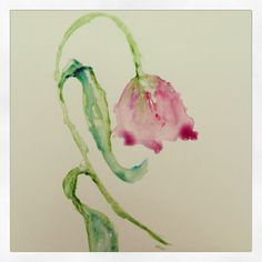 #botanical #illustration #flowers