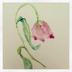 #botanical #illustration #flowers