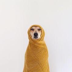Cute dear! #dog #pet #cute #animal #winter