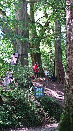Tree Climb Activity