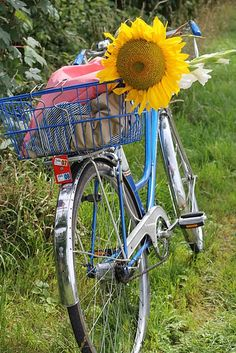 Summer style-I could see riding this to a picnic and having a wonderful day