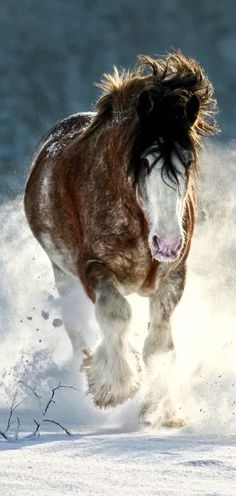 .Horses are so beautiful running in the snow!