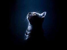 bella Phat nero micio