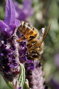 Insekten-Intelligenz imStecknadelkopf.   Kleines Gehirn ganz groß    Das Gehirn der Insekten ist kaum so groß wie ein Stecknadelkopf und doch verfügen sie teilweise über beachtliche geistige Fähigkeiten, die sich mit denen großer Säugetiere messen können.
