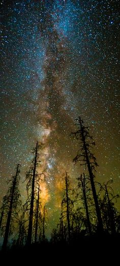 The Milky Way above the trees. - Imgur