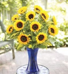 10 stems of sunflowers in a cobalt blue vase. We've mixed bright and cheery sunflowers into a cobalt blue vase for a stunning presentation. Flowers for the Holidays! Check out our site! Beach Flowers, All Flowers, Bridal Flowers, Fresh Flowers, Gift Flowers, Cheap Flowers, Beautiful Flowers, Sunflower Arrangements, Floral Arrangements