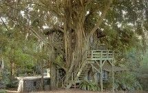 Well Camouflaged - Amazing Treehouse