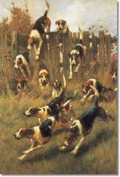 'Fox Hounds at Full Cry' Thomas Blinks (1860-1912)